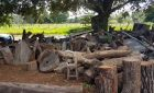 PMA autua marceneiro por armazenamento ilegal de madeira