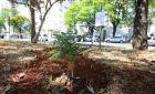 Cozinheiro planta maconha em frente à prefeitura pelo direito ao relaxamento