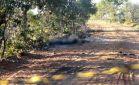 Corpo carbonizado é encontrado em estrada vicinal perto da Gameleira na Capital