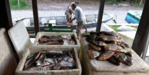 Quatro são flagrados com quase 1 t de pescado e autuados em R$ 60 mil