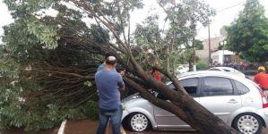 Árvore cai sobre carro em frente ao Hospital da Vida em Dourados