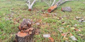 Agricultor é autuado em R$ 4 mil por derrubada ilegal de árvores