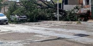 Após chuva rápida e vento forte bombeiros registram 6 quedas de árvores em Campo Grande