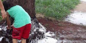 Menino de 10 anos se 'revolta' e dá banho em árvore para tentar salvá-la de envenenamento em MS