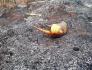 Incêndio deixa animal morto e paranaense é multado em mais de R$ 320 mil